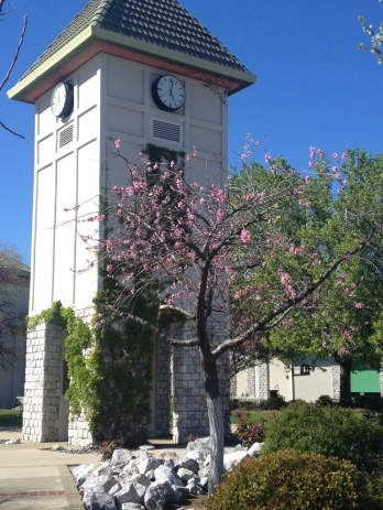 Simpson University bell tower in spring
